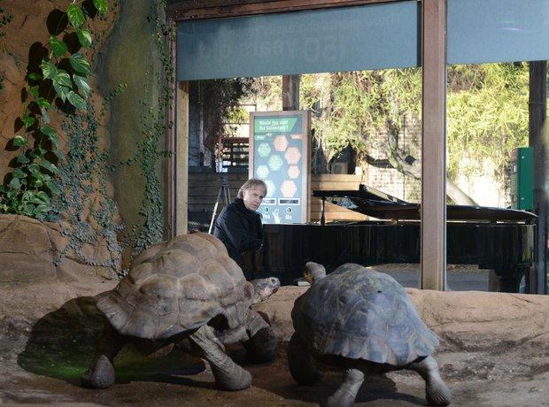 Richard Clayderman at London Zoo