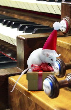 Mouse in santa hat and organ