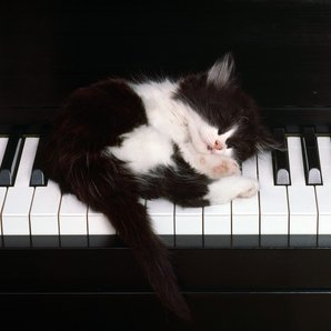 cat sleeping piano kitten