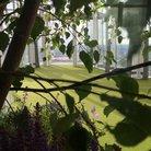 shard garden